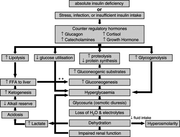 Fig.2 Patofysiologi diabetisk ketoacidose. Ref. Wolfsdorf et al. Diabetes Care 2006; 29: 1150-9. Gjengis med tillatelse.
