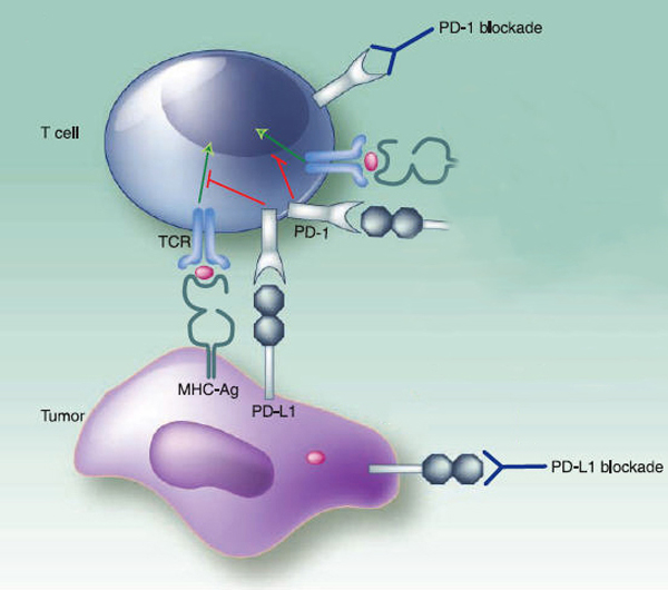 tumor-with-pd-1-upregeulation