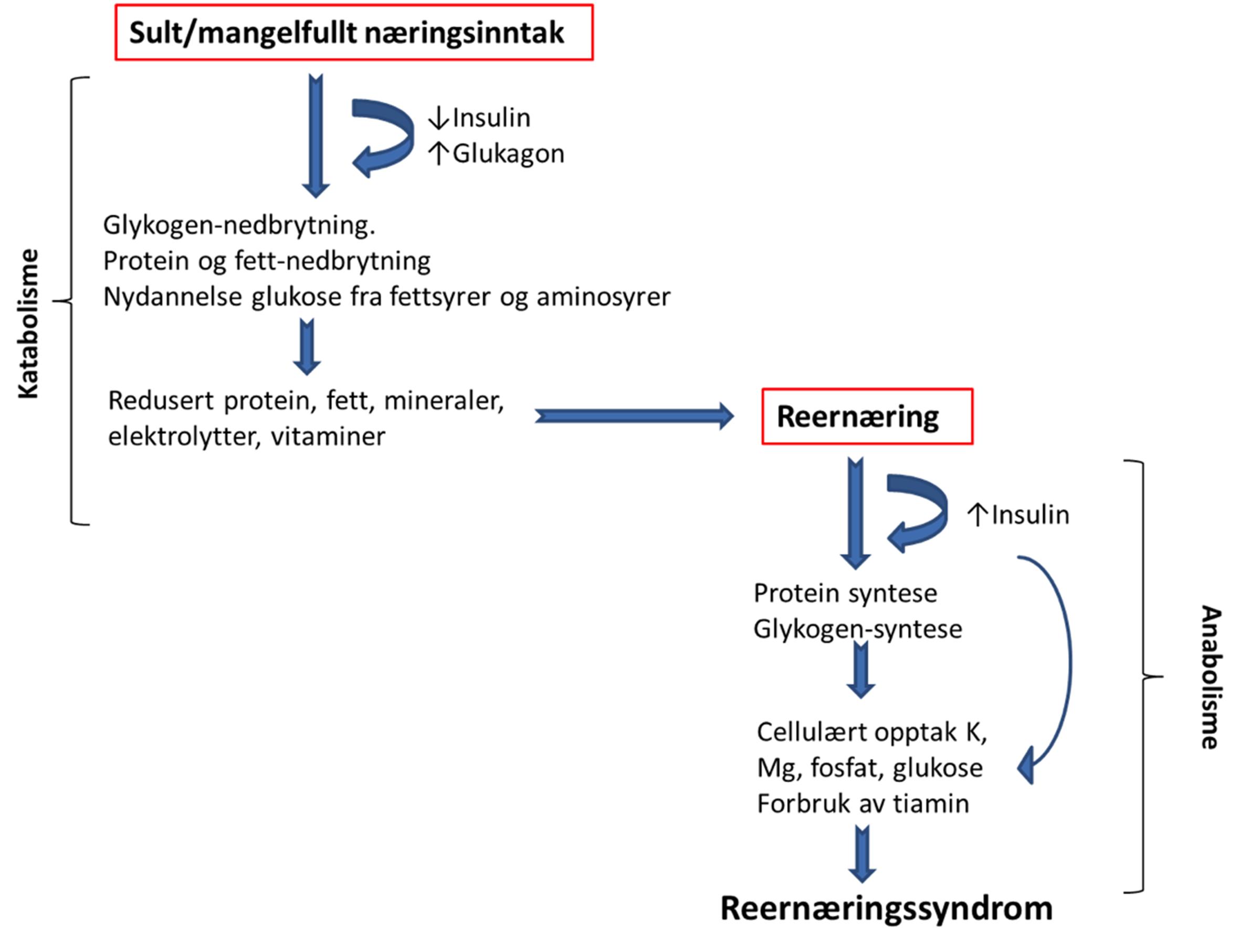 Figur 1. Patogenese for utvikling av reernæringssyndrom Reernæringssyndrom forårsakes av et raskt skifte fra katabol metabolisme (fettmetabolisme) til anabol metabolisme (karbohydratmetabolisme) med insulinsekresjon og påfølgende elektrolytt-skift fra ekstracellulært til intracellulært.