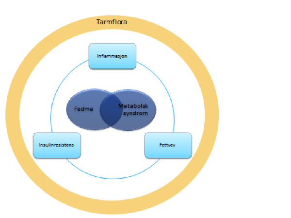 Figur 1. Tarmbakteriene ser ut til å kunne påvirke en rekke av prosessene som fører til fedme og metabolsk syndrom
