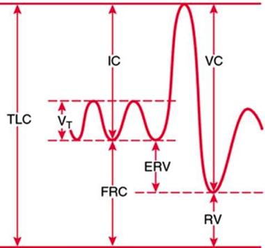Figur 1. Statiske lungevolum (Illustrasjon fra The free dictionary by Farlex)