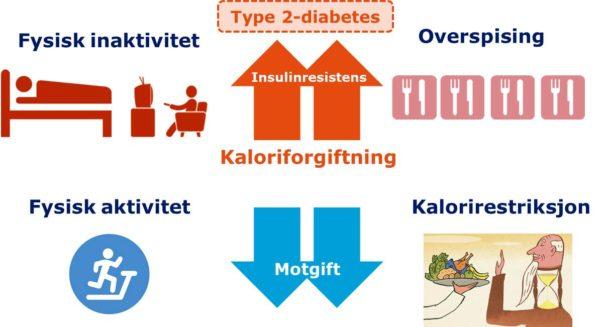 Figur 4. Kalorirestriksjon er vist å kunne reversere den type 2-diabetiske tilstanden.
